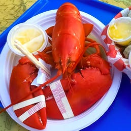 Cooked 1.5 lb Lobster - 10 Pack